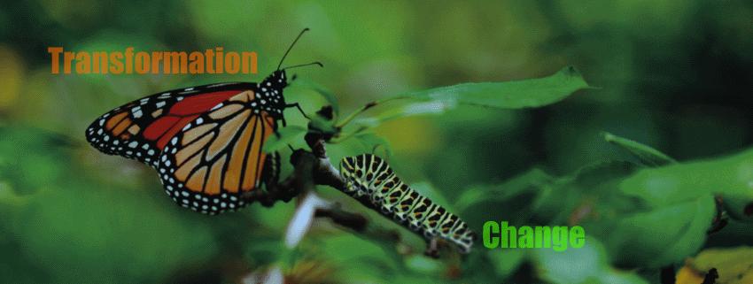 Fast caterpillars